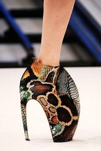 Lizard Toe